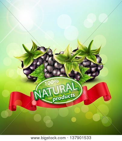 Vector background with blackberries and red ribbon