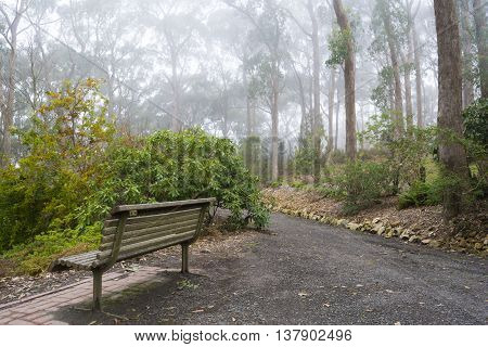 Path And Park Bench In Fog At Mount Lofty Botanic Garden, South Australia