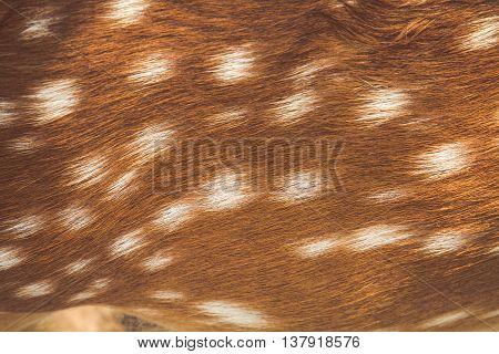 Deer Skin Pattern