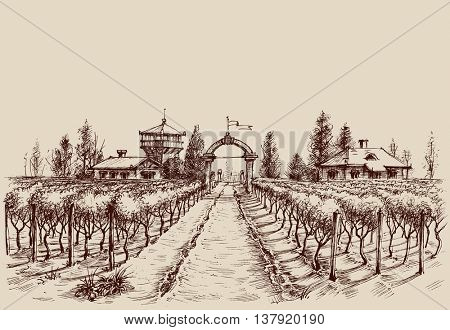 Vineyard vector drawing, etch style. Farm entrance and vine culture