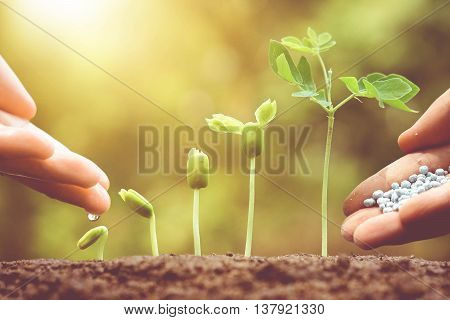 Agriculture. Growing plants. Plant seedling. Hand nurturing and watering young baby plants growing in germination sequence on fertile soil with natural green background