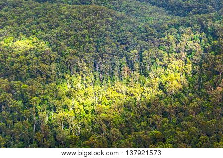 Aerial View On Australian Forest