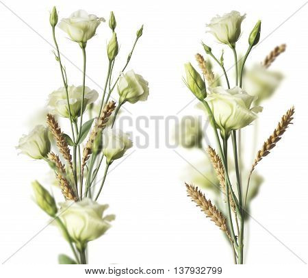 Two white roses bouquets and weat with blurr effect. Image over white background