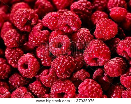 Raspberry background of berries. Large group of raspberry berry food