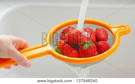 Rinsing strawberries in a sieve under a jet of water