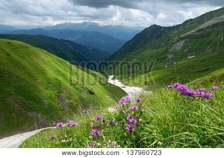 Summer landscape in the mountains. Pink flowers in the lush green grass. Cloudy day. Snow in the valley. Wild nature. Caucasus, Georgia, Zemo Svaneti