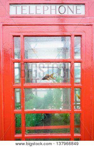 Red public telephone box converted to aquarium in Beer Head Caravan Pak near village Beer in Devon