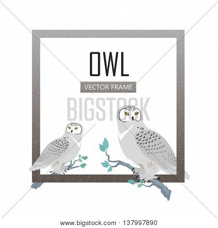 Snowy owls vector frame. Predatory birds wildlife concept in flat design. North fauna illustration for , encyclopedia, childrens books illustrating. Beautiful owls birds seating isolated on white.