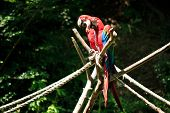 beautiful macaw parrots sitting on a branch poster