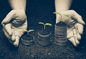 hands holding trees growing on coins / csr / sustainable development / economic growth / trees growing on stack of coins / Business with environmental concern poster