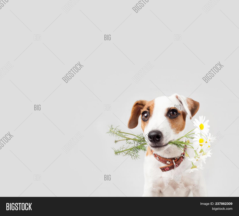Dog Bouquet Flowers Image Photo Free Trial Bigstock