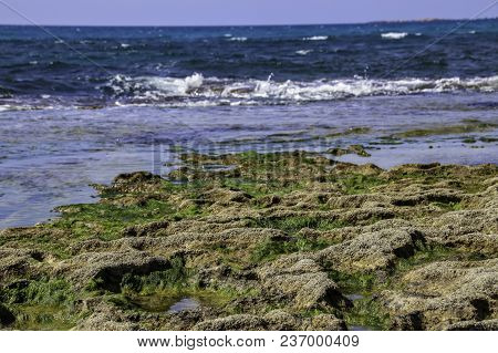 Stones And Seaweed Algae At Low Tide. Mediterranean Sea.