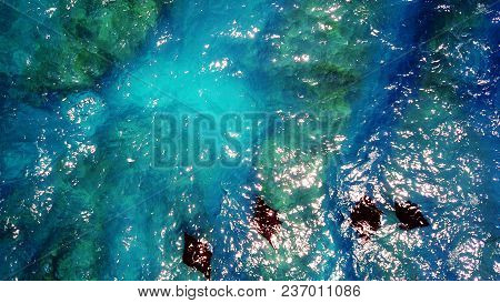 Top View Of A Flock Of Mantese Fish Swimming In The Ocean