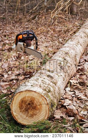 Cut Tree Log With Chain Saw In Background.