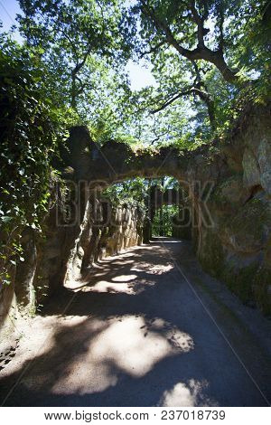 Magical Summer Path. Park. Beautiful Scene Sunlit Old Forest With Sun Rays, Shadows And Lianas.