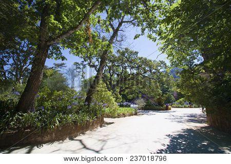 Magical Summer Path. Park. Beautiful Scene Sunlit Old Park With Sun Rays, Shadows And Lianas.