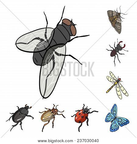 Different Kinds Of Insects Cartoon Icons In Set Collection For Design. Insect Arthropod Vector Isome