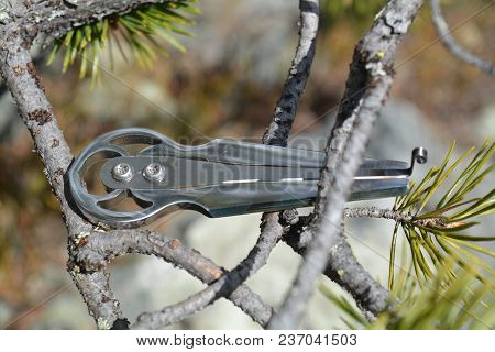 The Ancient Musical Instrument Of The Harp In The Branches Of The Northern Pine