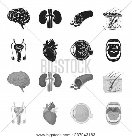 Male System, Heart, Eyeball, Oral Cavity. Organs Set Collection Icons In Black, Monochrome Style Vec