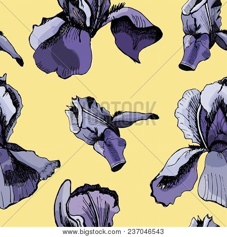 Seamless Pattern  With Hand Drawn Graphic  And Colored Sketch With Iris  On Yellow Background. Vecto