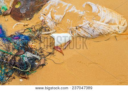 Garbage On Sand Beach. Trash On Seashore. Ecological Problem. Plastic In Sea. Cleaning Seaside. Plas
