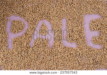 The Inscription Of Pale With Malt Grains On A Lilac Textile Background. Craft Beer Brewing From Grai