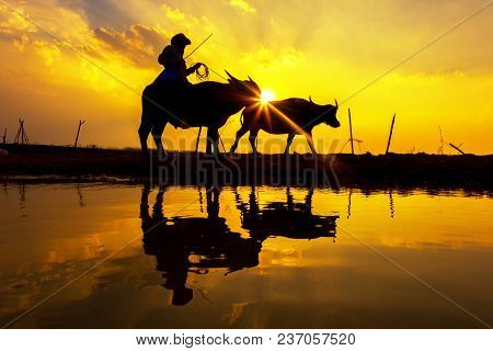 Silhouette Sunset With Lifestyle Countryside,silhouette Animal Husbandry In Countryside,farmer With
