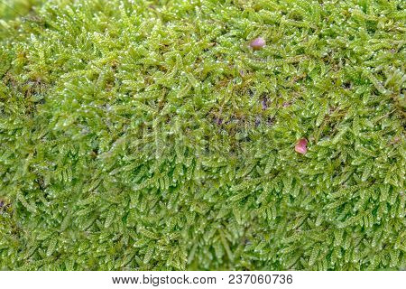 Close Up Shot Of Moss Growing On A Log, Green And Vibrant Growth Making A Beautiful Background Shot