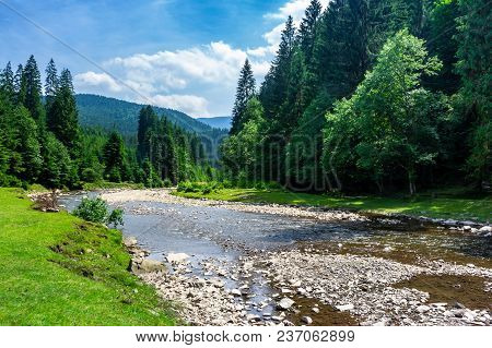 Mountain River Among The Forest In Summer. Rocky Shore And Grassy Banks. Low Water Capacity. Green A