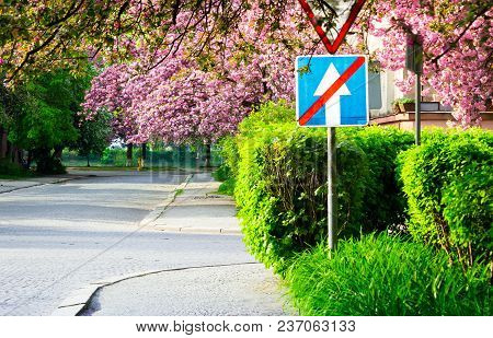 Delicate Pink Flowers Of Blossomed Japanese Cherry Trees Over The Street Blurry Background