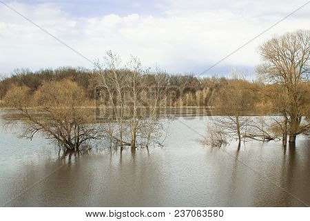 Flood In Spring. Flooded Trees In The River In Sunny Weather