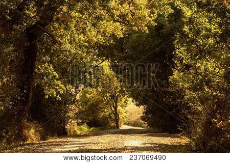 Tunnel From The Oak Trees Over A Road In The Italy, Natural Seasonal European Autumn Background