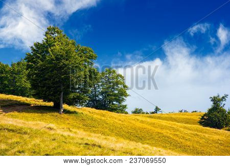 Trees On A Grassy Hillside In Summer. Lovely Nature Scenery