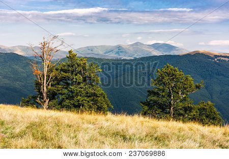 Trees On A Hillside With Mountains In The Distance. Beautiful Summer Landscape Of Svydovets Mountain