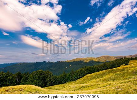 Beautiful Summer Landscape Of Carpathians. Grassy Slopes And Forested Hillsides. Ukrainian Alps With