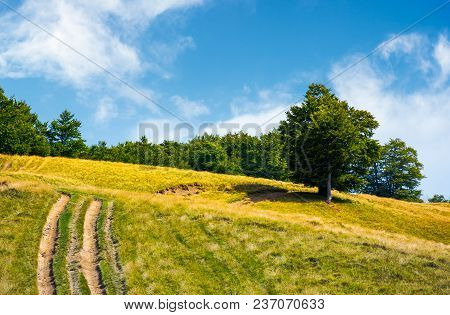 Mountain Road Uphill Along The Forest. Beech Tree Stand Separately On The Grassy Meadow. Lovely Natu