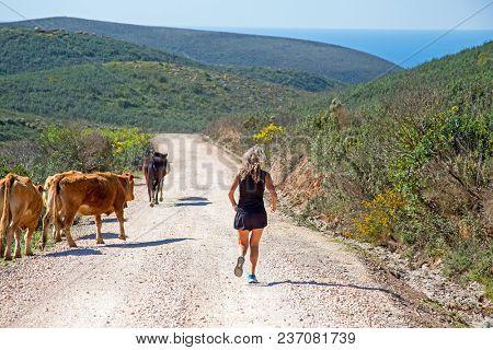 Sportive mature woman jogging down hill at the atlantic ocean inbetween the cows