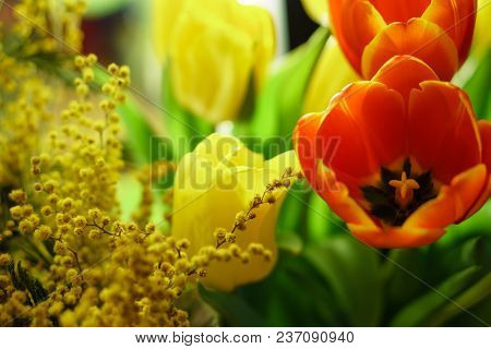 Bouquet Of Yellow And Red Tulips. Yellow Mimosa In Flower Arrangement. Floral Background. Spring Moo