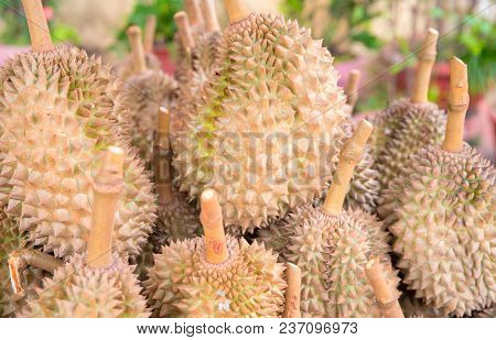 Tropical Fruit Durian On Market. Exotic Fruit Durian For Sell. Whole Ripe Durian With Brown Green Sp