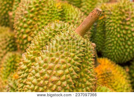 Durian Fruit Pile On Market. Exotic Fruit Durian For Sell. Whole Ripe Durian With Yellow Green Spiky