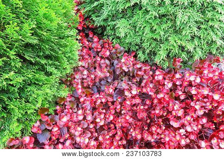 Photography With A Natural Background Of Red And Green Plants