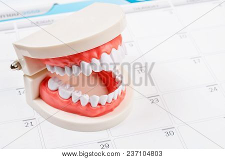 Calendar Page And Dentist Demonstration Teeth Model. Dentist Concept.