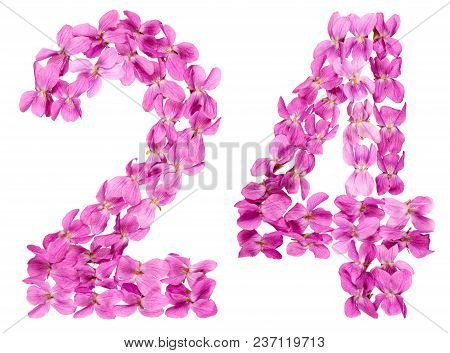 Arabic Numeral 24, Twenty Four, From Flowers Of Viola, Isolated On White Background
