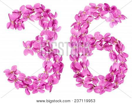 Arabic Numeral 36, Thirty Six, From Flowers Of Viola, Isolated On White Background
