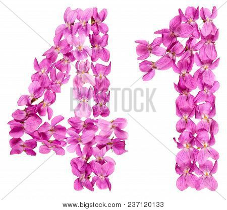 Arabic Numeral 41, Forty One, From Flowers Of Viola, Isolated On White Background