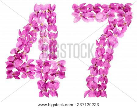 Arabic Numeral 47, Forty Seven, From Flowers Of Viola, Isolated On White Background