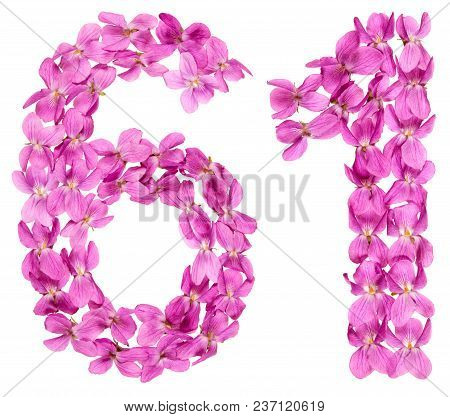 Arabic Numeral 61, Sixty One, From Flowers Of Viola, Isolated On White Background