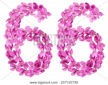 Arabic Numeral 66, Sixty Six, From Flowers Of Viola, Isolated On White Background