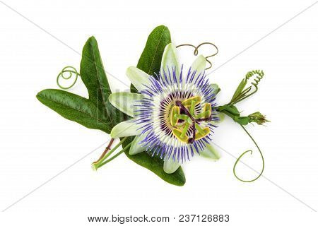 Closeup Shot Of Passion Flower Isolated On White Background.