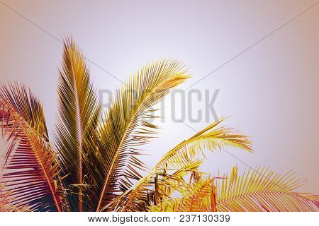 Coco Palm Tree Vintage Toned Photo. Tropical Vacation Destination Place. Exotic Island Holiday. Trop